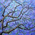 Majestic Jacaranda by Wendy Sinclair