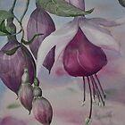 Watercolour: Fuchsia Buds Magenta by Marion Chapman