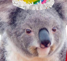 Koala-fied To Party Sticker