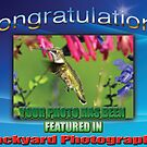 Feature Banner Backyard Photography by imagetj