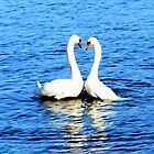 Swans in Love by Susan  Wellington