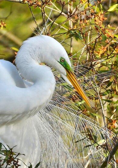 Great White Egret Portrait by Kathy Baccari