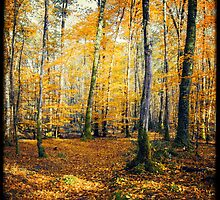 Yellow Trees by Marc Loret