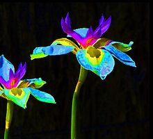 Fantasy Irises 2 by Margaret Saheed