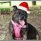 Christmas Staffy by Staffaholic