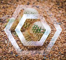 Cactus - Hexagon by Monosquid