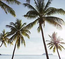 Beachfront Coconut Palms by visualspectrum