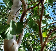 Trees 5 by Skyangel