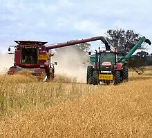 Harvesting Canola ...  by Rosalie Dale