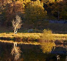 Reflections by Jeanie