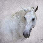 Delfin - Lusitano by Wendy Lilygreen