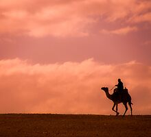 Sunset Camel Rider by Michael Brewer