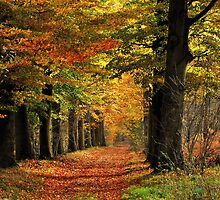 Still enjoying the autumnal colour festival by jchanders