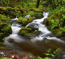 Woodland Falls II by Jeanie