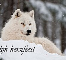 Arctic Wolf Christmas Card Dutch 1 by WolvesOnly