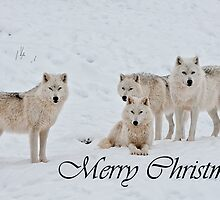 Arctic Wolf Christmas Card English 2 by WolvesOnly