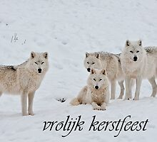 Arctic Wolf Christmas Card Dutch 2 by WolvesOnly