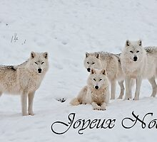 Arctic Wolf Christmas Card French 2 by WolvesOnly