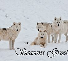 Arctic Wolf Seasons Card 2 by WolvesOnly