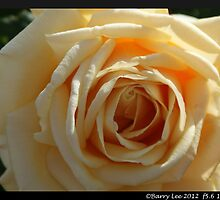 Rose bud by barrylee