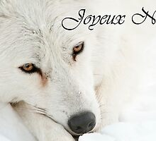 Arctic Wolf Christmas Card French 4 by WolvesOnly