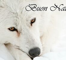 Arctic Wolf Christmas Card Italian 4 by WolvesOnly