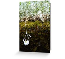 A Garden In The Rainforest Greeting Card