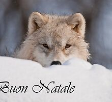 Arctic Wolf Christmas Card Italian 7 by WolvesOnly