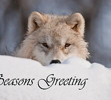 Arctic Wolf Seasons Card 7 by WolvesOnly