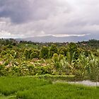 Up in the Mountains of Bali - Banyuatis by jayneeldred