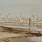 My Day at The beach by Deborah  Benoit