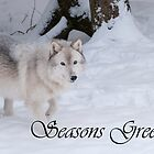 Timber Wolf Seasons Card 1 by WolvesOnly