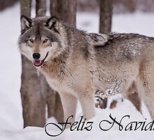 Timber Wolf Christmas Card Spanish 3 by WolvesOnly