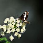 Butterfly by Donna Ridgway