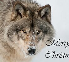 Timber Wolf Christmas Card English 9 by WolvesOnly