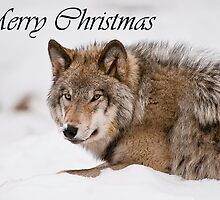 Timber Wolf Christmas Card English 11 by WolvesOnly