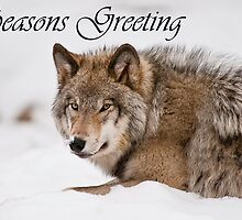 Timber Wolf Seasons Card 11 by WolvesOnly