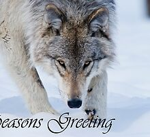 Timber Wolf Seasons Card 12 by WolvesOnly