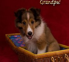 Grandparents Day Grandpa Sheltie by jkartlife