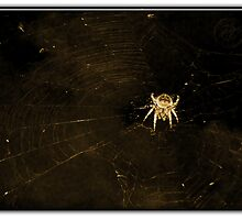 ©BPS Spider On The Wind II Sepia by OmarHernandez