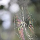 Rainbow Web by Lilla123