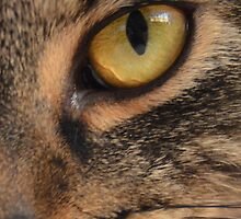 Close Up Cat 7 by spoilmesweetie