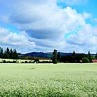 Summer Fields...Oregon Between Stayton & Mahama by trueblvr