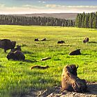 Yellowstone, Yellowstone National Park by GregorDyer