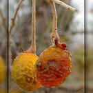 FROZEN BERRIES by Betsy  Seeton