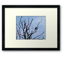 Crown of Limbs Artistic Photograph by Shannon Sears Framed Print