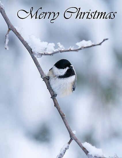 Chickadee Christmas Card 3 by Michael Cummings
