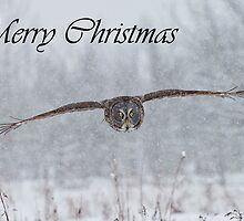 Great Gray Owl Christmas Card 2 by Michael Cummings