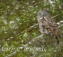 Great Gray Owl Christmas Card 9 by Michael Cummings