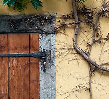 Detail of door and ivy on house facade. by FER737NG